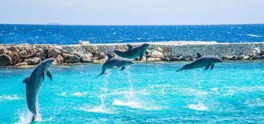 Šťastný delfín