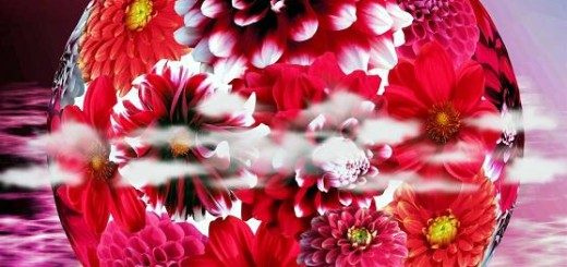 Květ-harmonie