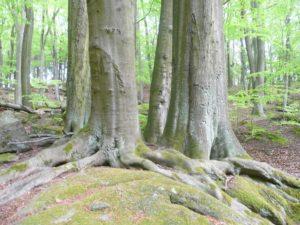 Les Posázaví
