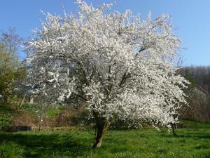 Zahrada a soběstačnost