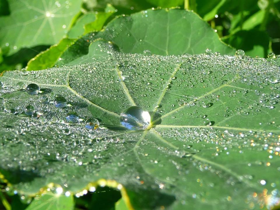 léčivé byliny kontryhel