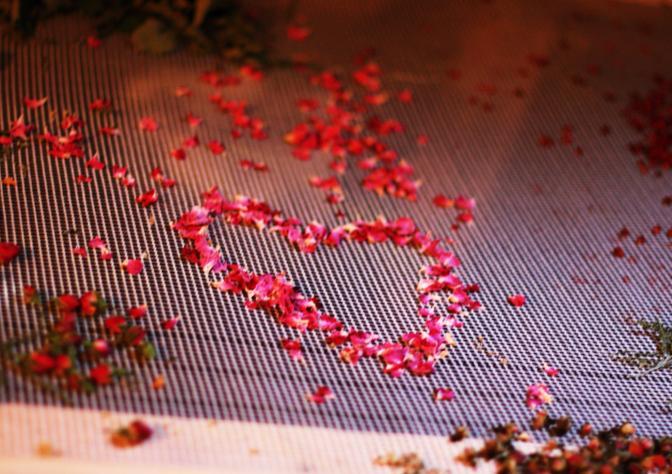 sušené plátky růží