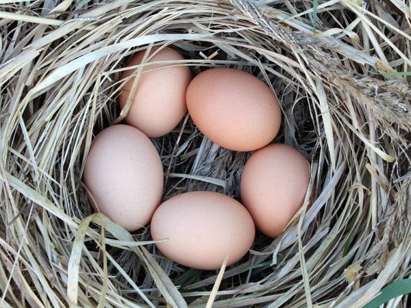 Velikonoce 2014 - Slepičí vajíčka v hnízdě