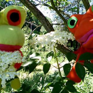 Šťastné žáby a černý bez